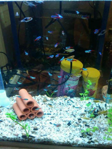 壁纸 动物 海底 海底世界 海洋馆 水族馆 鱼 鱼类 450_600 竖版 竖屏